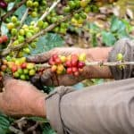 Climate change is making coffee a risky bet for Central America