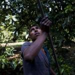 Mexico anti-drug militias return land to villagers