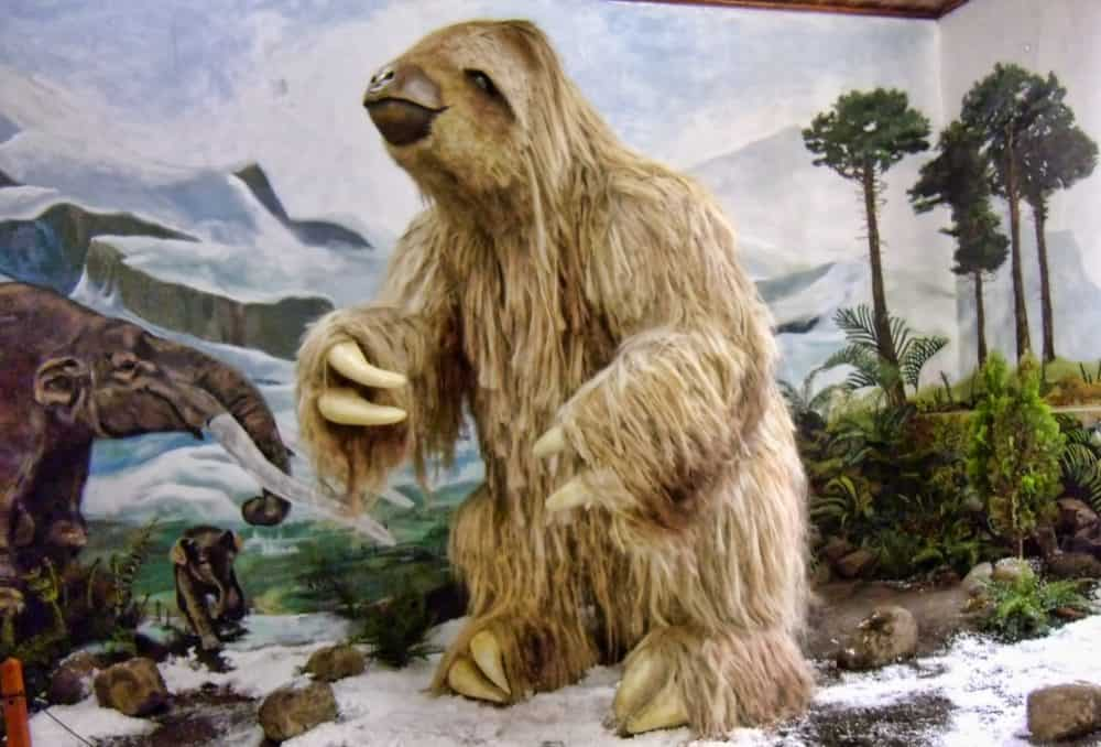 Ancient Giant Sloth Pictures