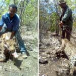 Jaguar's death by hunters alarms Costa Ricans