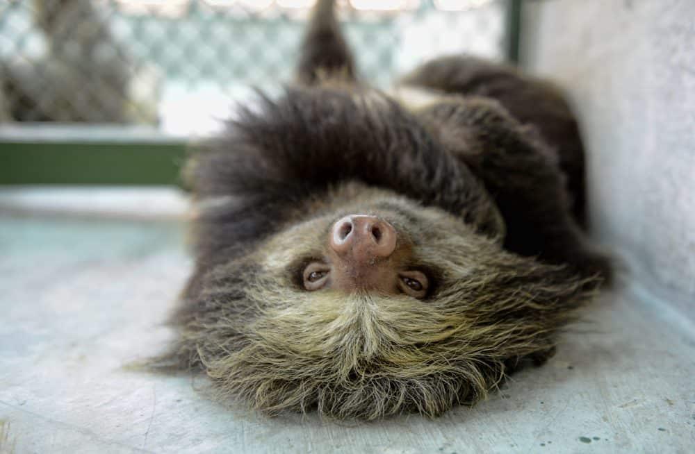 creepy sloth gif