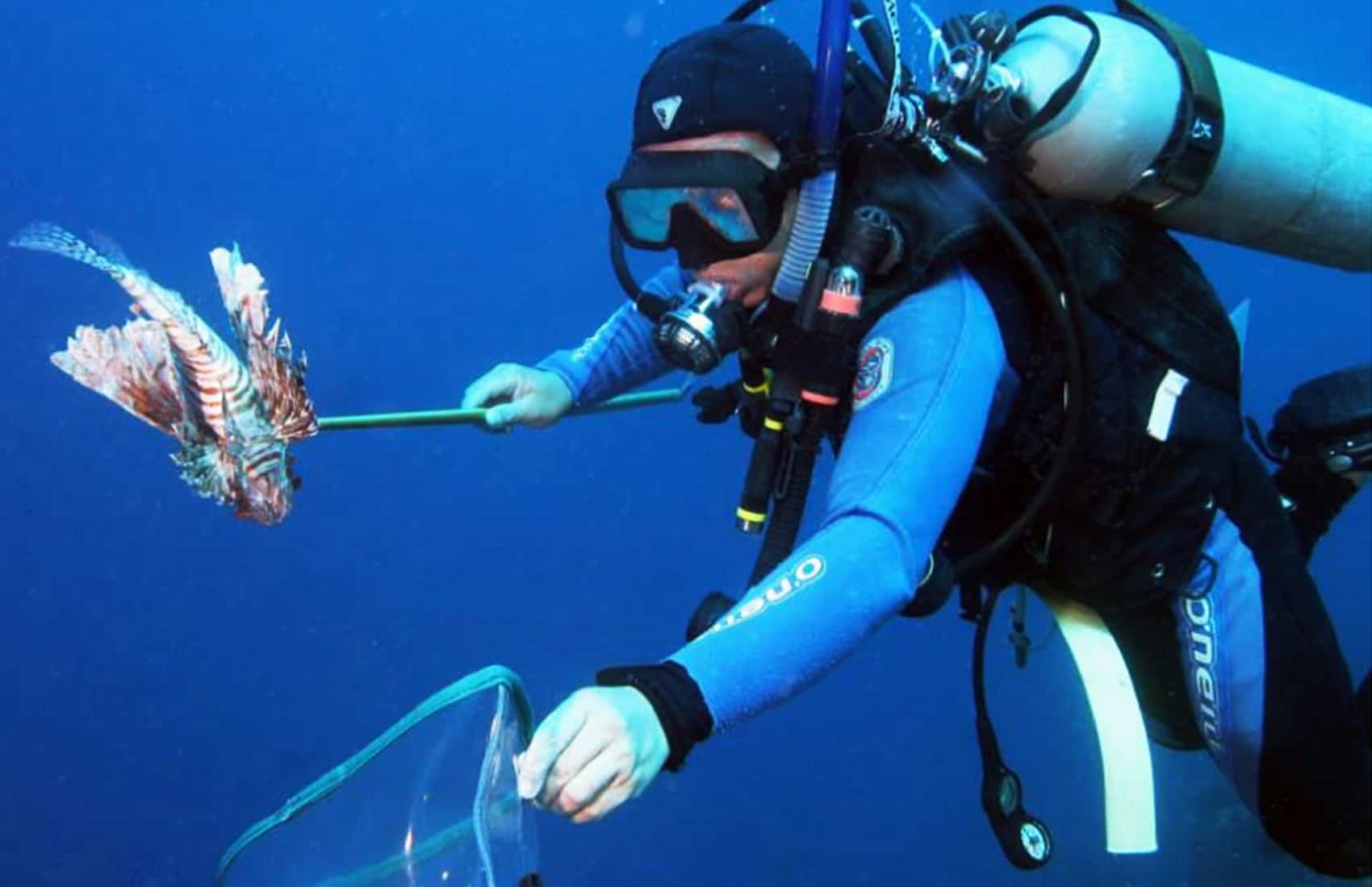 Broadbarred firefish