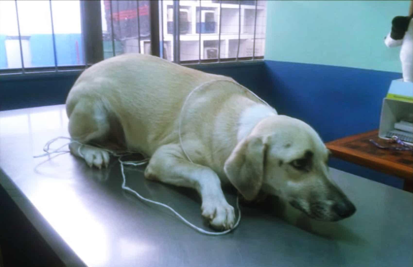 Ruta 27 adopted dog