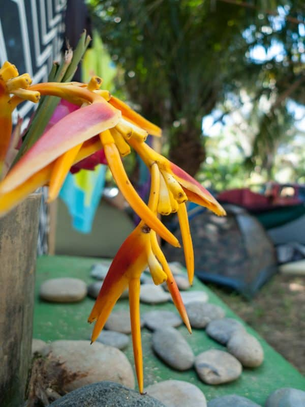 decorations on the campsite