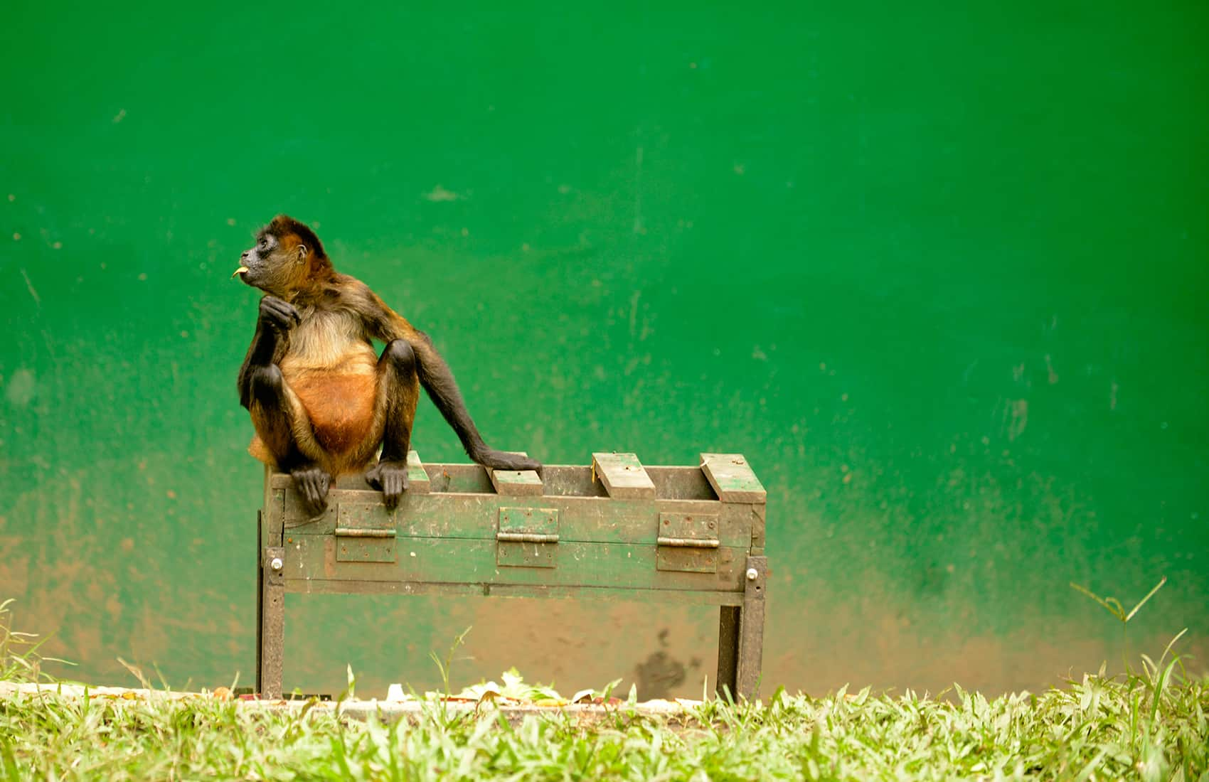 What are the social, environmental and political implications of zoos?