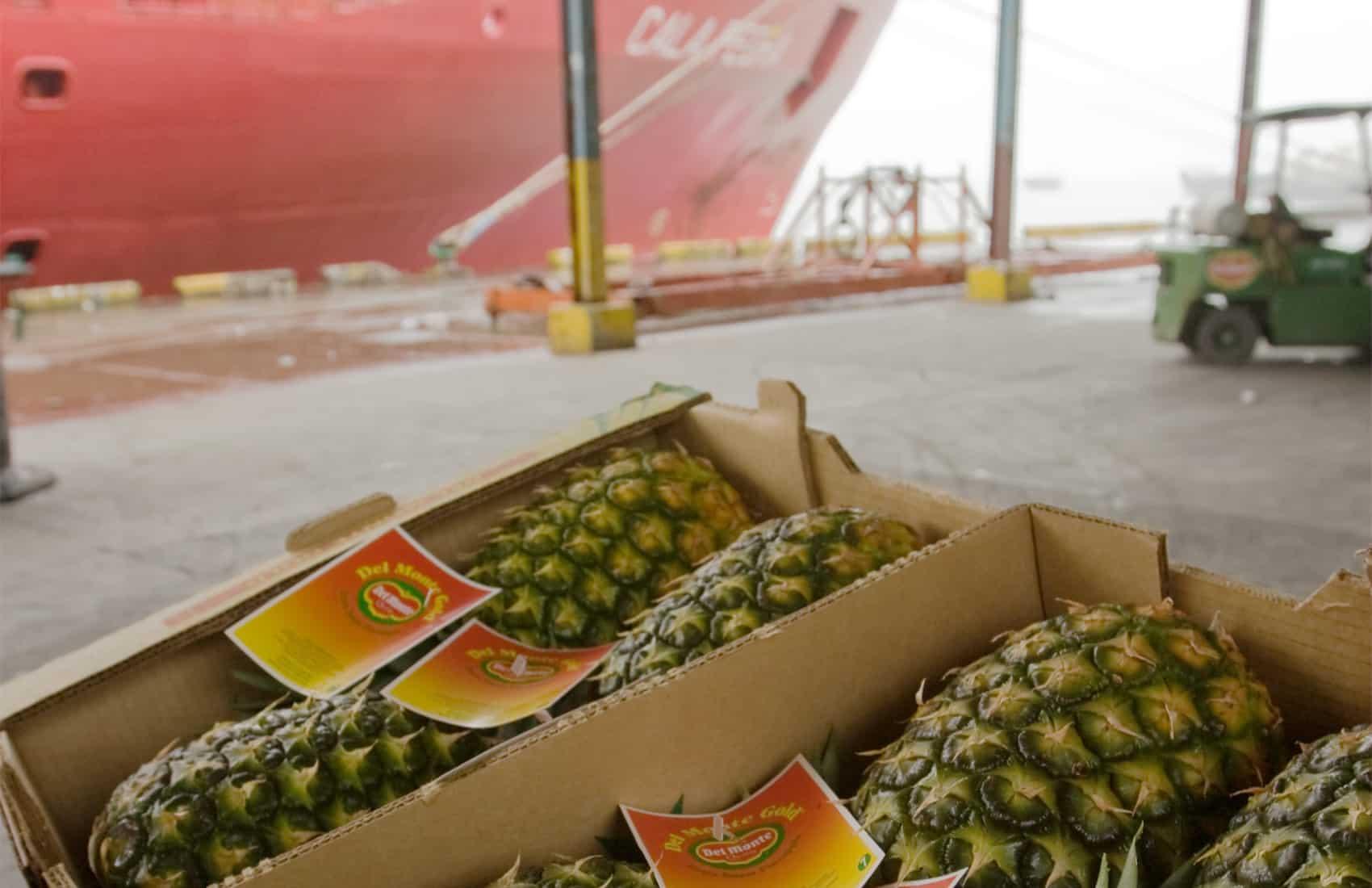Fruit exports