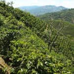 Costa Rica's coffee sector to receive $2 million to improve farming practices