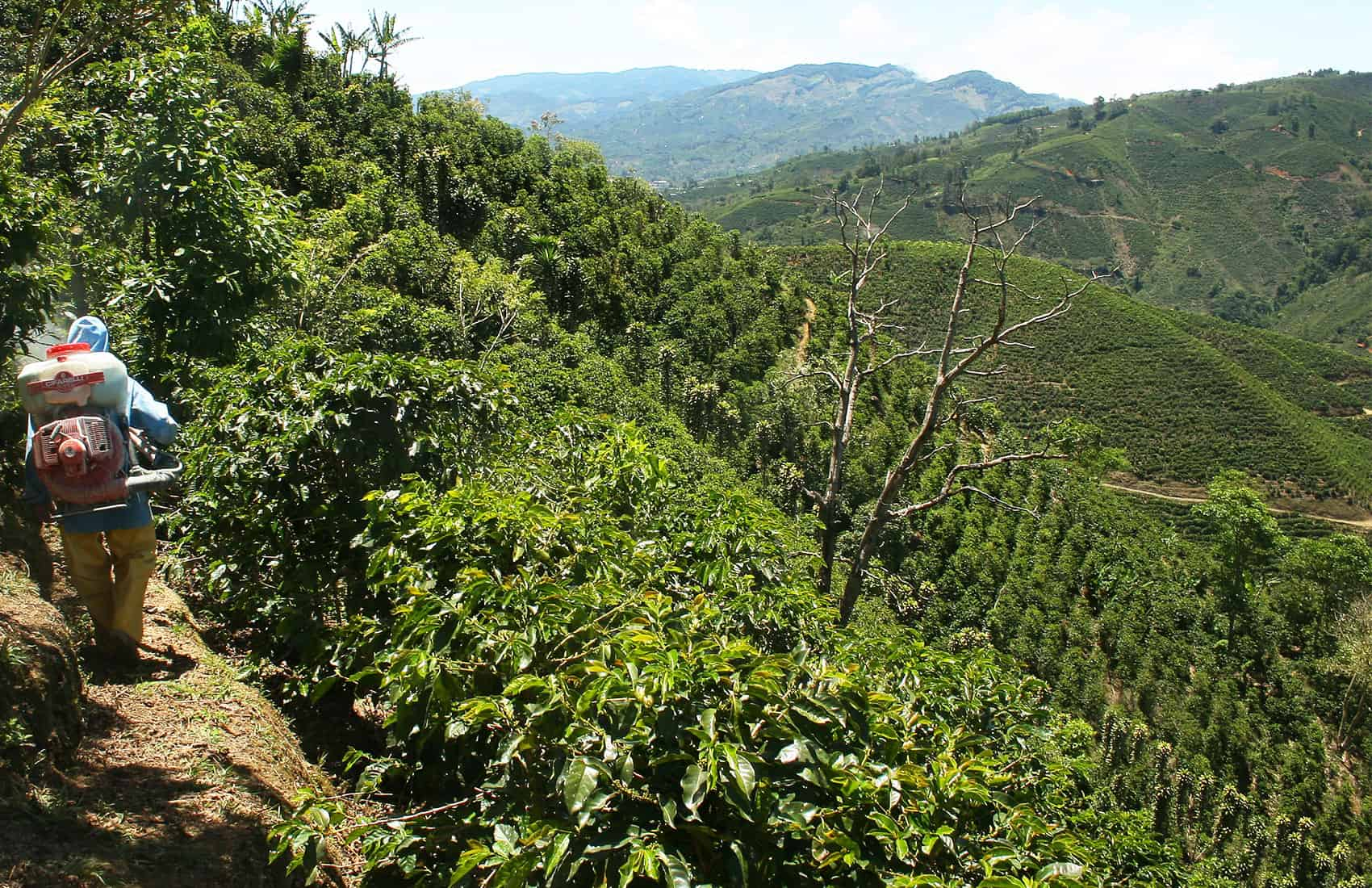 Coffee farm in Costa Rica