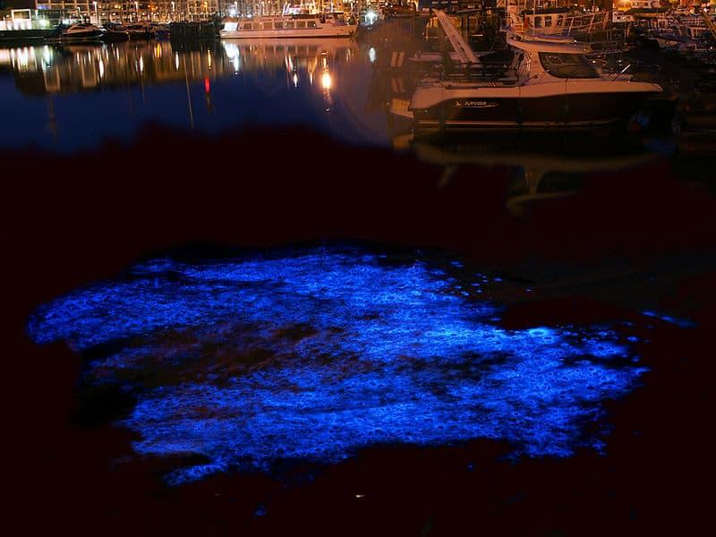 bioluminescent in bocas del toro the tico times costa rica news