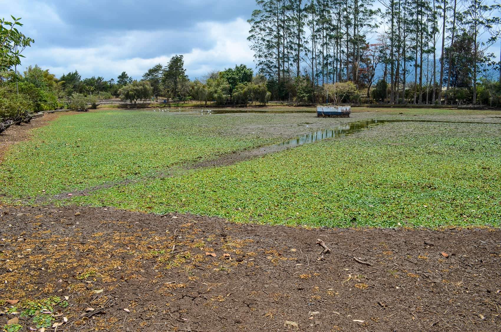 Laguna de Doña Ana