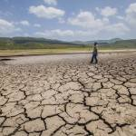 Drought hits Central America's crops, cattle