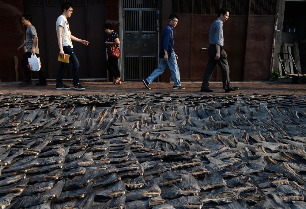 Shark Enemy of the Year: Shark fins in Hong Kong