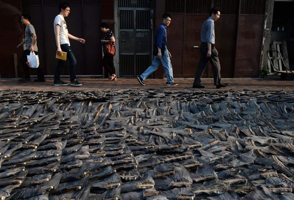 Shark Enemy of the Year: Shark fins in Hong Kong