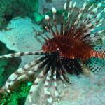 Costa Rica battles invasive species with lionfish consumption campaign