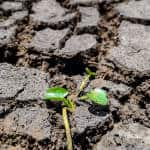Costa Rica declares national emergency over drought in northwestern province of Guanacaste