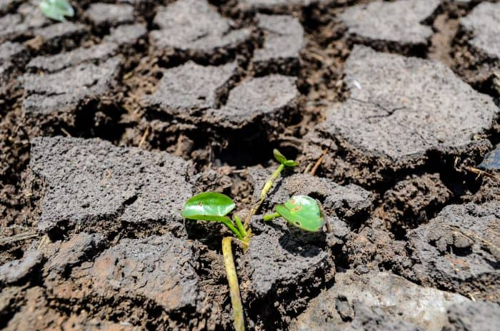A drought in Guanacaste in August 2014 was the worst on record since 1950, according to the National Meteorological Institute.