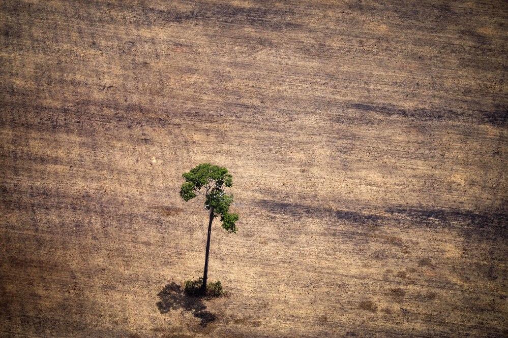 deforestation in the Amazon