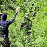 Costa Rican cops report seven tons of marijuana, 21 tons of cocaine confiscated in 2014
