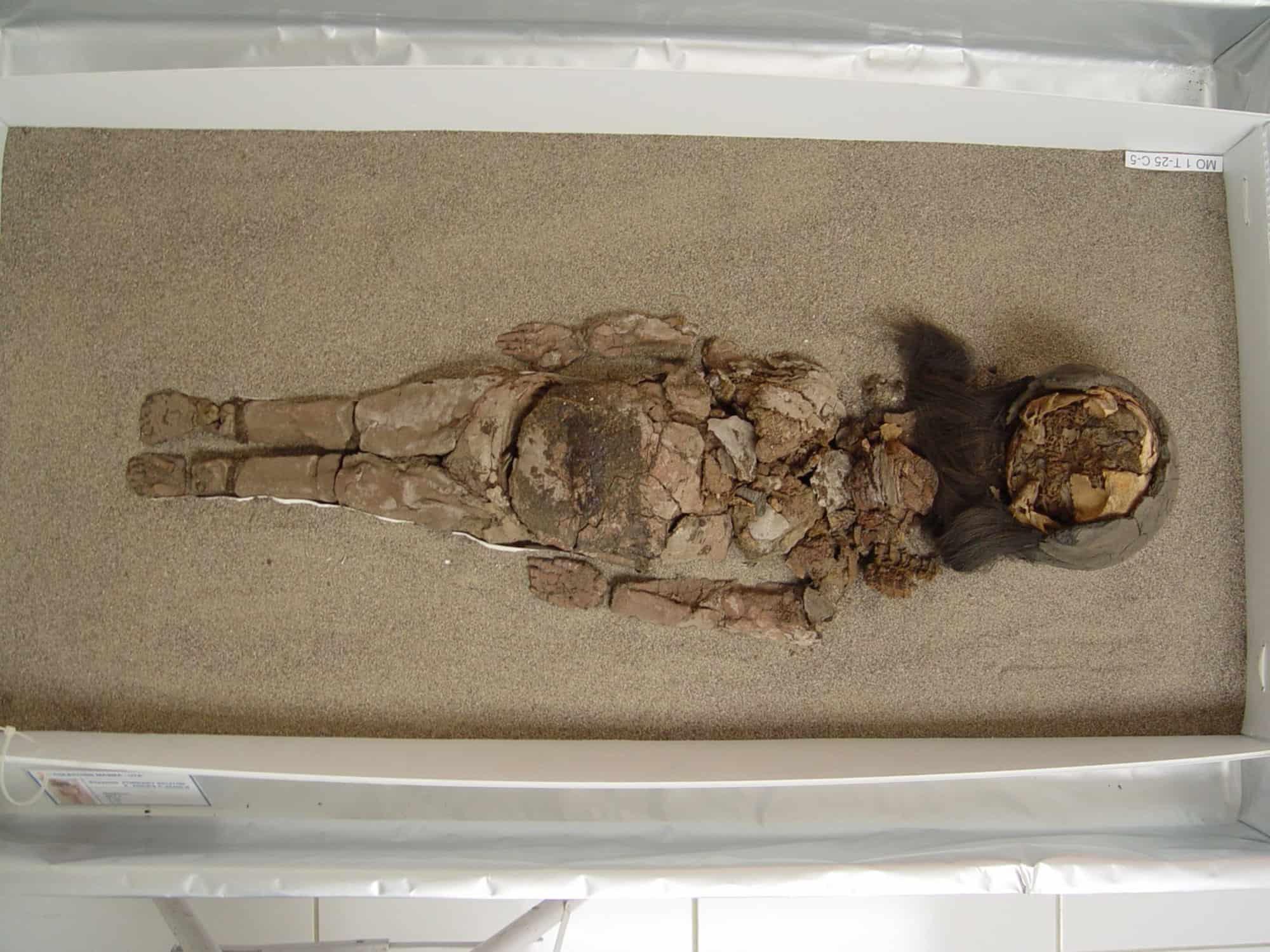 A Chinchorro mummy at San Miguel de Azapa Museum in Arica, Chile