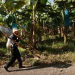Costa Rica recognizes first carbon-neutral banana company