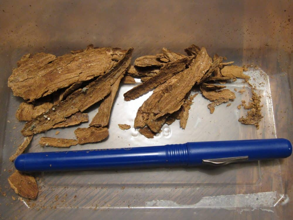 Dried bark of the plant Tabernanthe iboga.