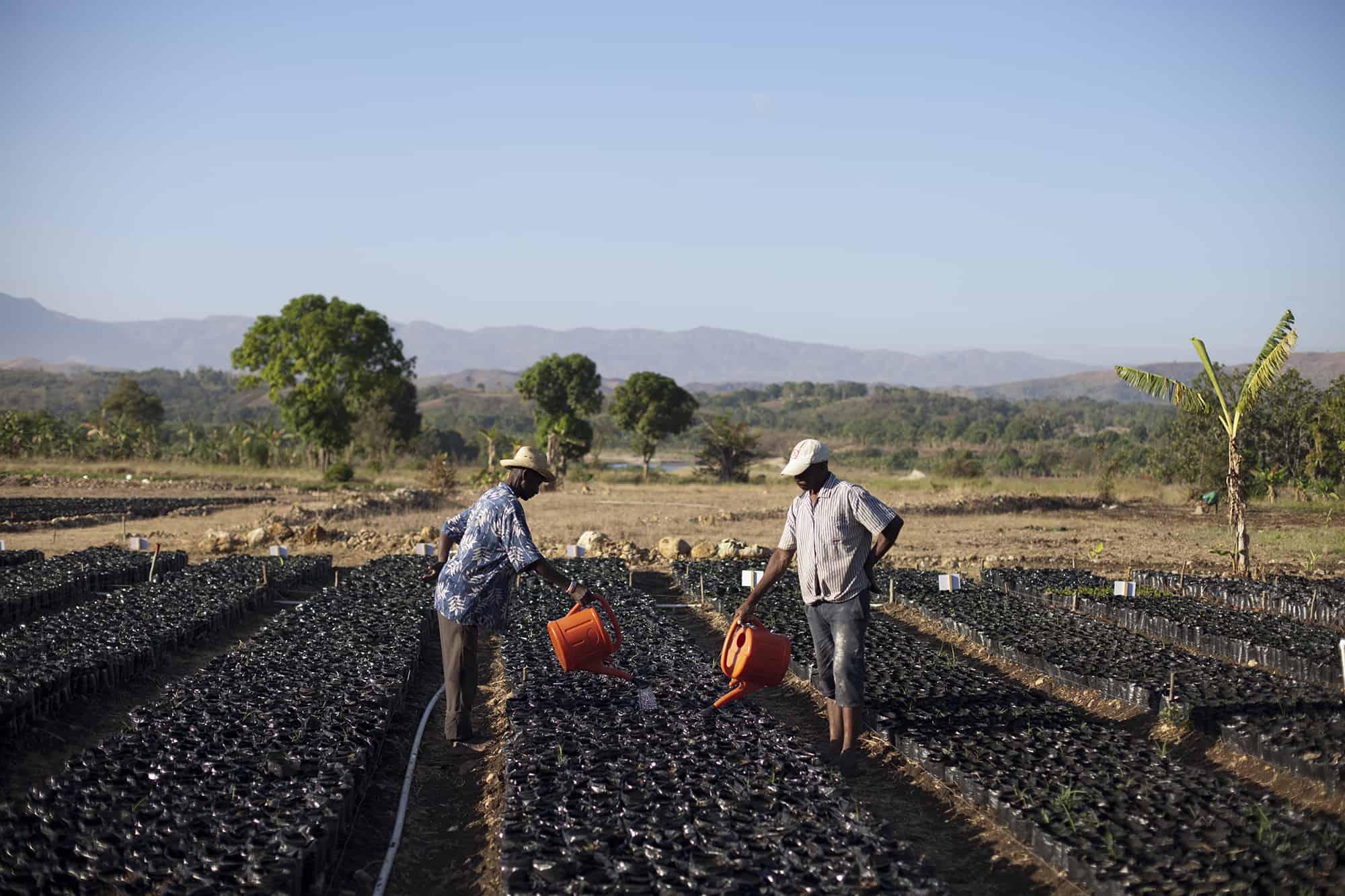 Two farmers water plants in the Nursery of Acceso Haiti, near Mirebalais, Haiti.