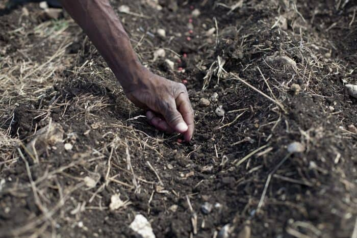 A farmer plants seeds in the Nursery of Acceso, Haiti, near Mirebalais.