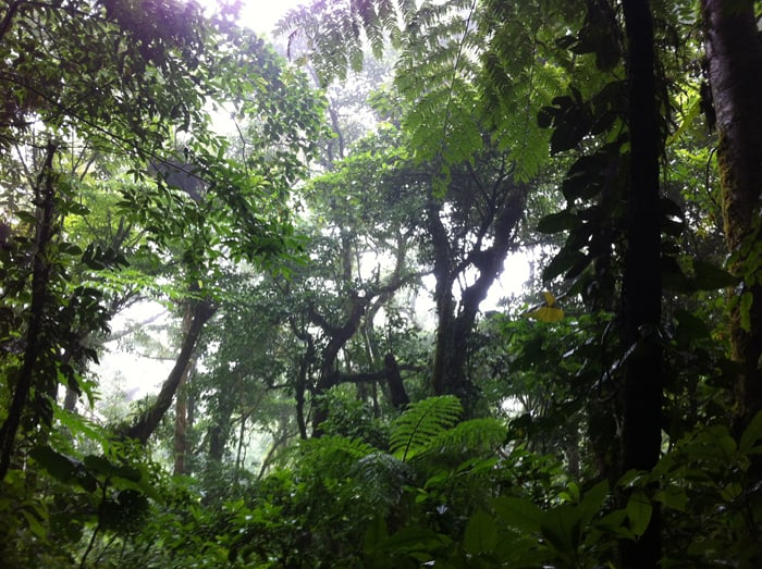 View of the cloud forest at Monteverde.