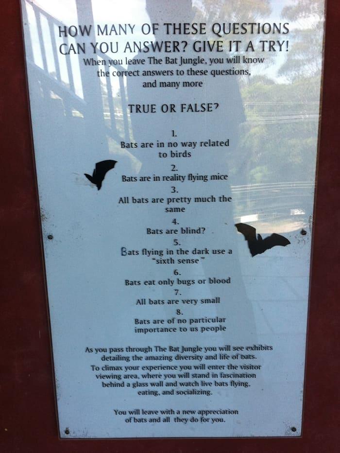 The bat quiz at the entrance of the Bat Jungle.