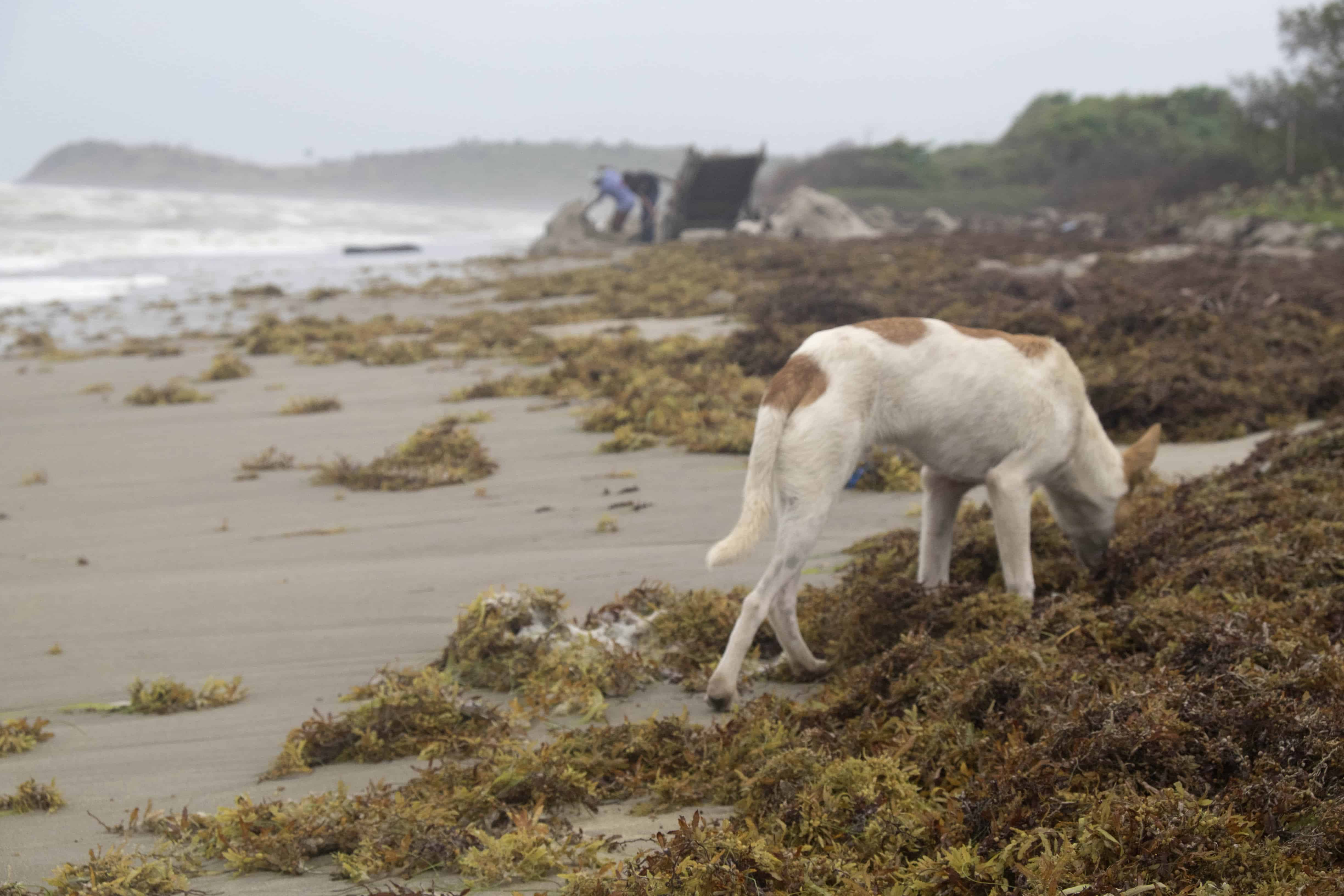 A dog searches for food in the same area that might contain packages of illicit drugs.