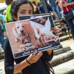 Whats the difference between a dog and a pig asks a vegan girl at the 7th March Against Animal Abuse in San José.