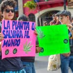 """The plant that would save the world"" and benefits of the plant like paper, fuel, food, medicine and textiles at the Marijuana legalization march in San José, May 09, 2015."