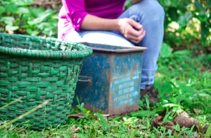 A woven basket is worn with a belt to allow the harvester to use both hands.