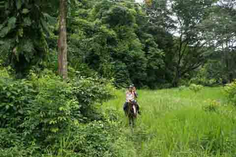 Credit: Caption: The colors of the rainforest are verdant and brilliant on a horseback ride.