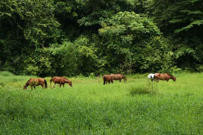 The horses at Discovery Horseback Tours are free to roam.