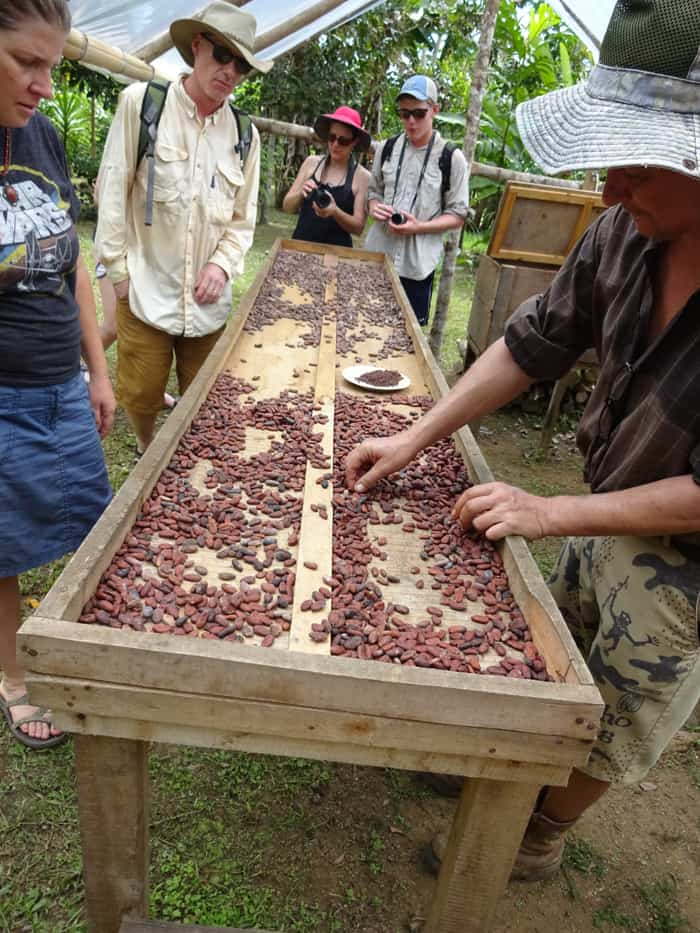Jean-Michel Pain shows how cacao beans are dried in the sun after a few days of fermenting.