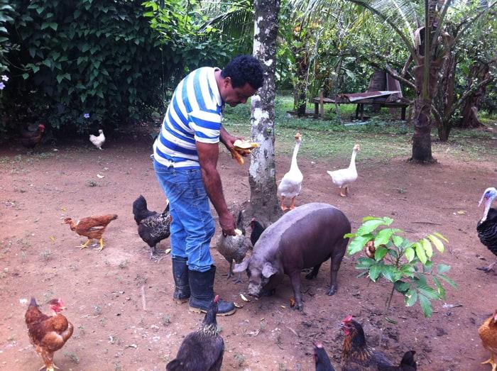 German Quirós Vivas feeds plantains to Bolincha the pig.