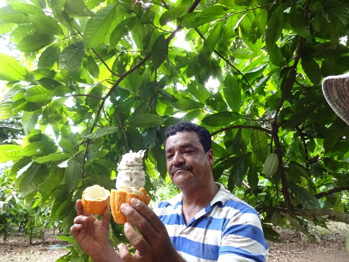 German Quiros Vivas shows guests what a cacao pod looks like on the inside.