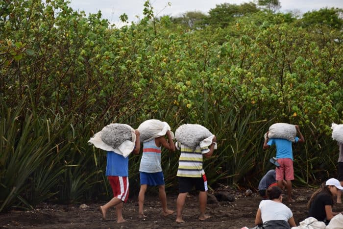 In Ostional, Guanacaste, men carry bags of olive ridley sea turtle eggs from the shore to the warehouse.