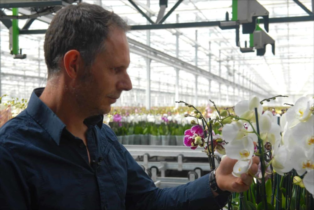 Ter Laak CEO Richard Ter Laak inspects a few of his blooms at Ter Laak Orchids in Wateringen, Netherlands, 2015.
