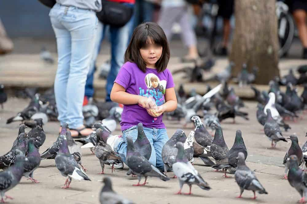 Pigeons at Plaza de la Cultura