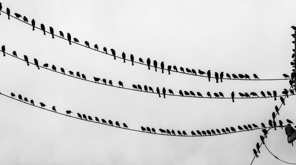 Birds on telephone wires