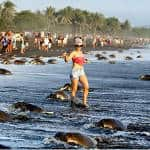Mob of tourists at Costa Rica's Ostional Beach prevents sea turtles from nesting