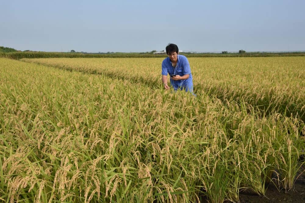 Trans-Pacific Partnership, Japan rice farmer.