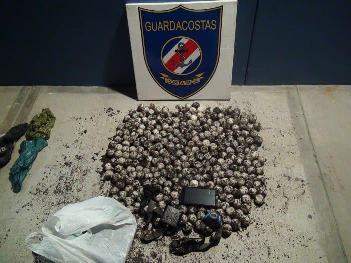 315 sea turtle eggs