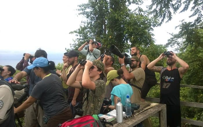 Birders looking up at raptors