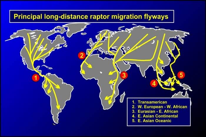 Map of raptor migration flyways