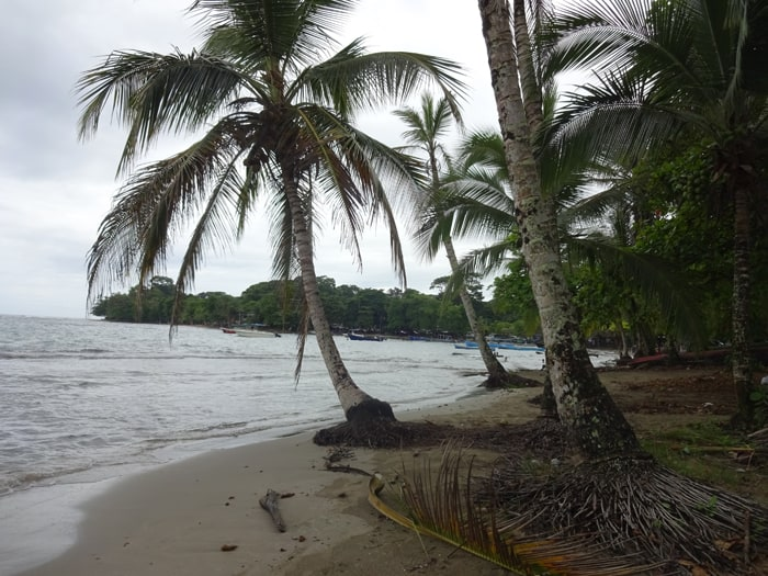 Palm trees on the beach at Puerto Viejo.