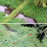 Damaged wetlands recovering along Costa Rica-Nicaragua border