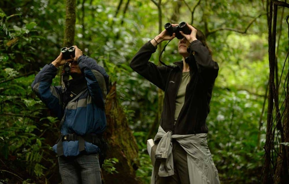 Birders looking through binoculars